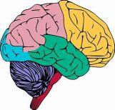 braincolour.jpg